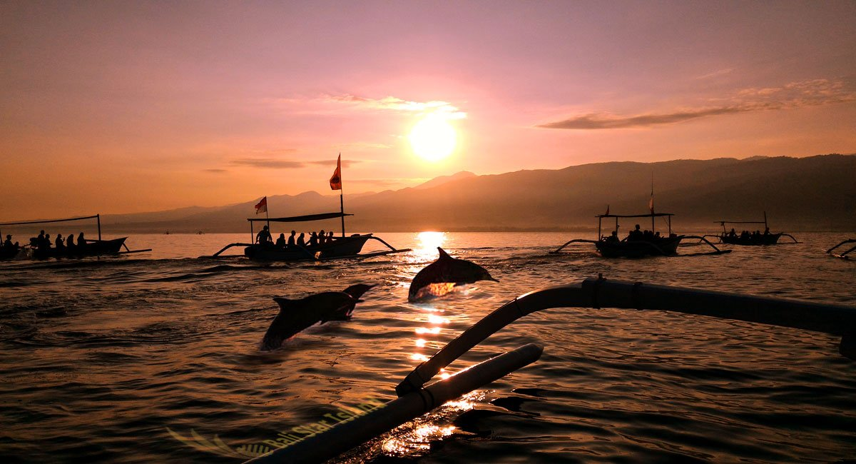 Dolphin Watching Singaraja Lovina Tours | Bali Tour Packages