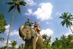 sumatra elephant ride, bali, elephant, sumatra, camp, bali elephant, bali elephant camp, safari, elephant safari, elephant riding, elephant safari ride, sumatra elephant ride