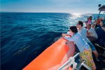 ocean cruise, cruises, day cruise, three islands day cruise, ocean rafting cruise, bali hai cruises