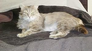 NALA : Minette joueuse et un peu craintive. Très sociable avec les autres chats. Elle apprécie néanmoins des moments tendresse avec les bipèdes et ronronne dès qu'on la caresse ! Une adoption en appartement est préférable.