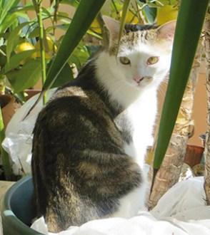 BAMBOU : Mâle d'1 ans très câlin, besoin accès extérieur. Besoin de la compagnie d'autres chats.