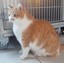 MITZOU : Quelques chats à l'adoption : des mâles et des femelles entre 1 et 4 ans.