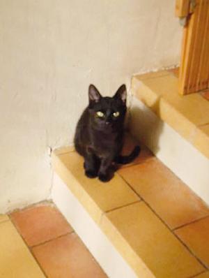 HARIBO : Minette de 4/5 mois calme mais encore peureuse - OK enfants et chien.