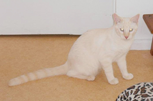 JIMMY : Mâle d'1 an, très câlin mais reste craintif, OK chats.