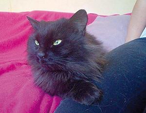 GUCCI : Minette de 18 mois poils longs, très gentille mais peureuse, OK chats, de préférence en appartement.
