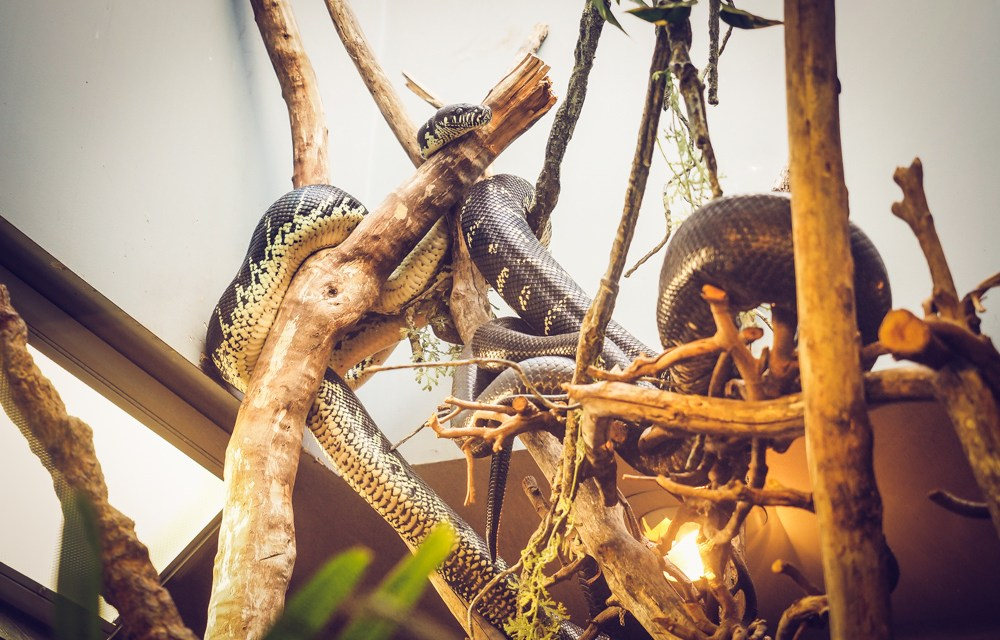 San Diego Zoo – Painting Snake Cages??!!  Is That Really A Job??