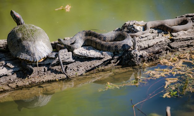 Caution – Watch for Snakes…