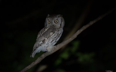 Harry, Hermione, a Backyard Owl Rescue, and Some Really Cute Baby Owls…