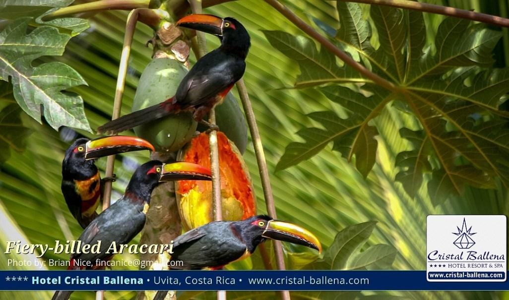 Hotel Cristal Ballena Boutique Hotel & Spa, Uvita, Costa Ballena, perfecto para la observación de aves
