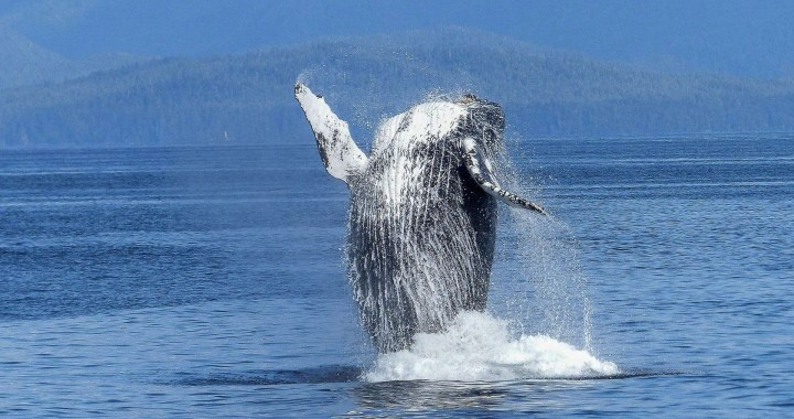 Whale and dolphins watching tour, Marino Ballena Nationalpark