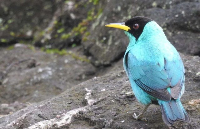 Interview with a Biologist Specialized in Birds - Ballena Tales The Magazine
