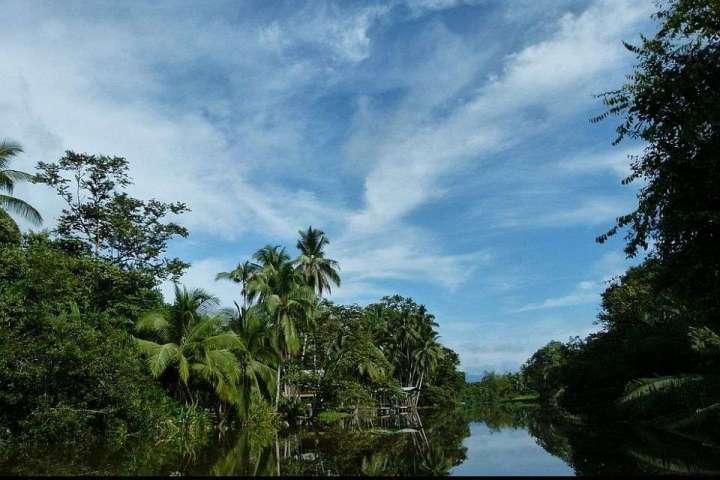 sierpe mangrove tour, mangrove forest