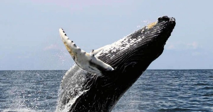 Love of Whales in the South Pacific of Costa Rica, Stay one more night ~ a Whale of a Deal - Osa, Uvita - Ballena Tales