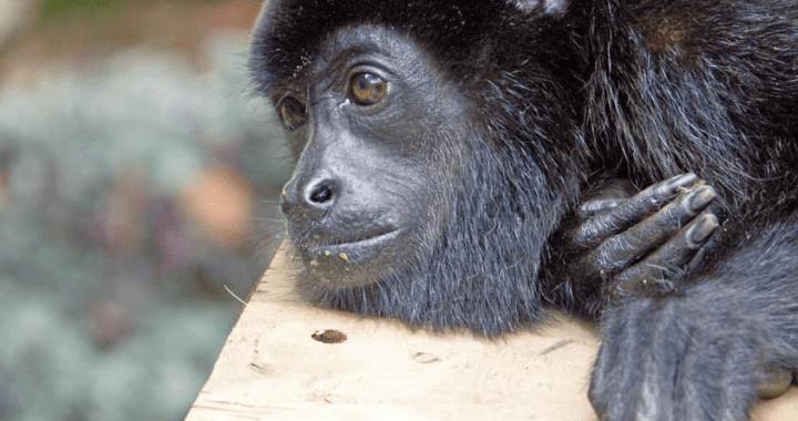 Admirando animales silvestres a distancia - Osa, Costa Ballena, Uvita