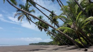 Improvement of Infrastructure at the Marino Ballena National Park, South Pacific Costa Rica