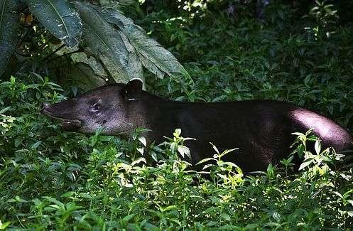 El Jaguar Jungle Lodge 2