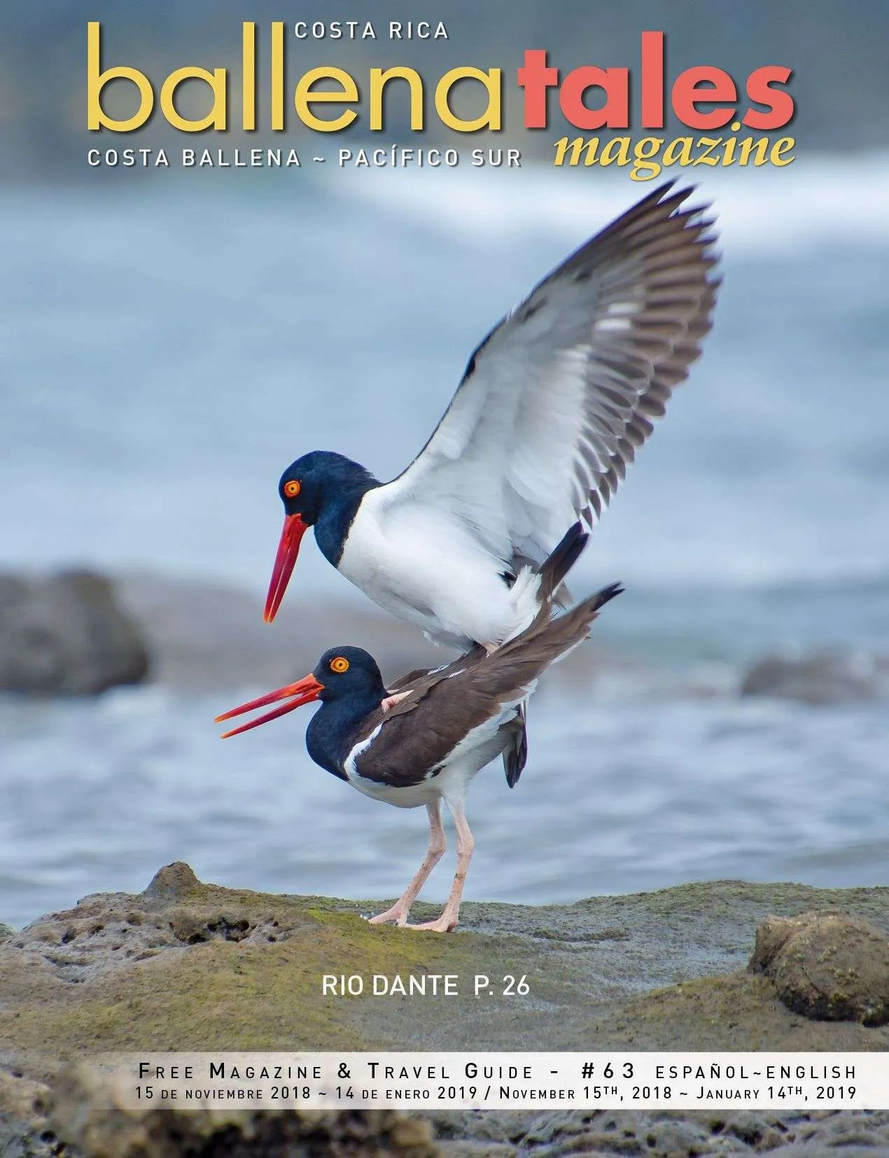 South Pacific Costa Rica Travel Guide, birds