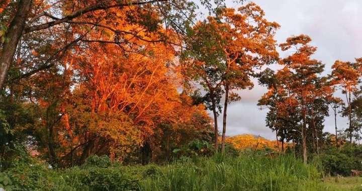 Hora dorada, golden hour in Costa Rica, Pacífico Sur