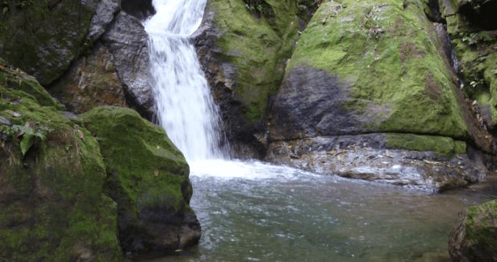 Ojochal preservation, nature preservacion pasión