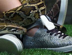 Gourmet Footwear Fall 2013 Snake Collection