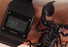 Basis Band Wearers Are Put To Test With Creepy Crawlies
