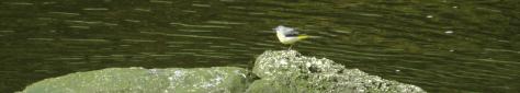 birdonhorserock