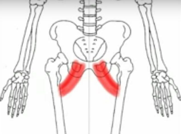 Detailed Article on Adductor Strain