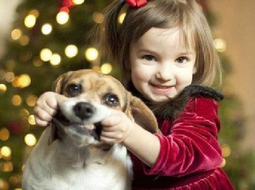 smile doggie happy face