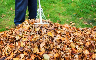 Last Day for Leaf Collection – Dec 21st