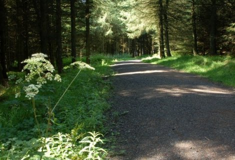 Walking Trails in co. Antrim