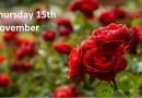 Garden Talk Roses