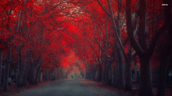 Red Forest Wallpaper 25836 - Baltana