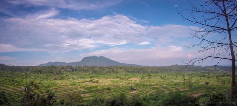 Scenic rice fields in Bali