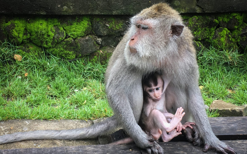 Monkey Forest, Ubud (Bali)