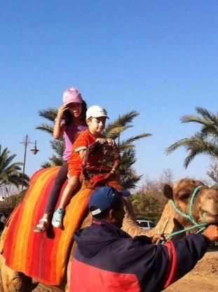 cammello a marrakesh