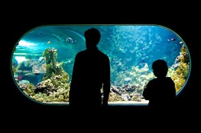 acquario-bergen_med_hr