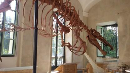 dinosauri--1010_110308