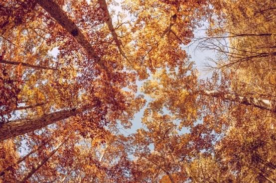 autumn-1031238_640