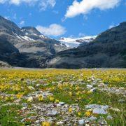 Leukerbad prato fiorito estate