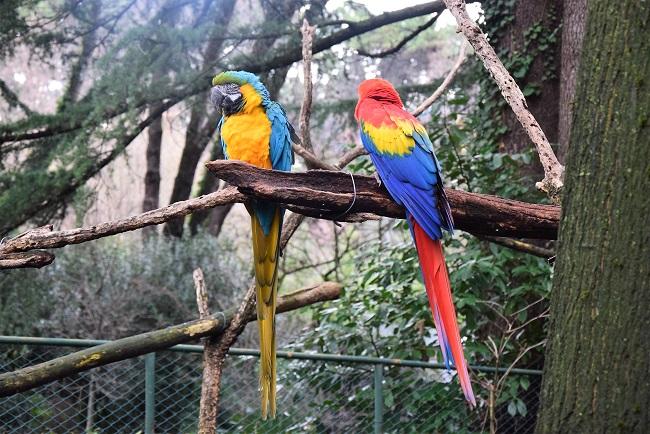 zoo di pistoia pappagalli