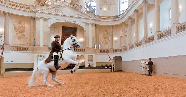 La scuola di equitazione spagnola di Vienna