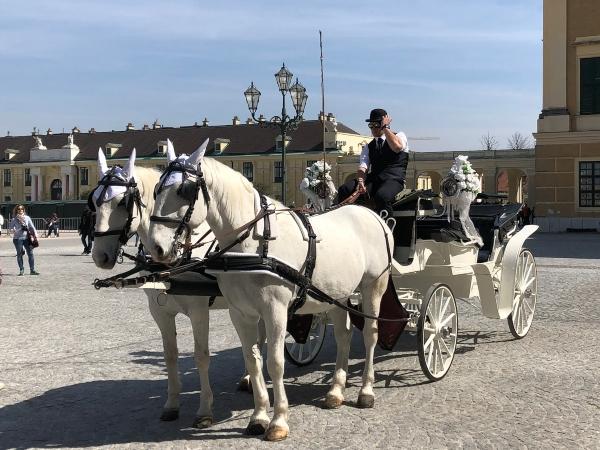 Fare un giro in carrozza a Vienna