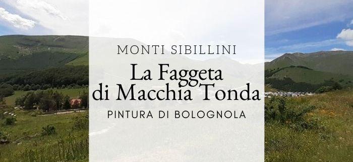 La faggeta di Macchia Tonda a Pintura di Bolognola