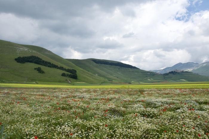 La piana di castelluccio di Norcia famosa per la sua fioritura