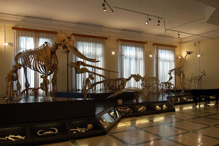 Musei per bambini di Roma: Museo della Zoologia