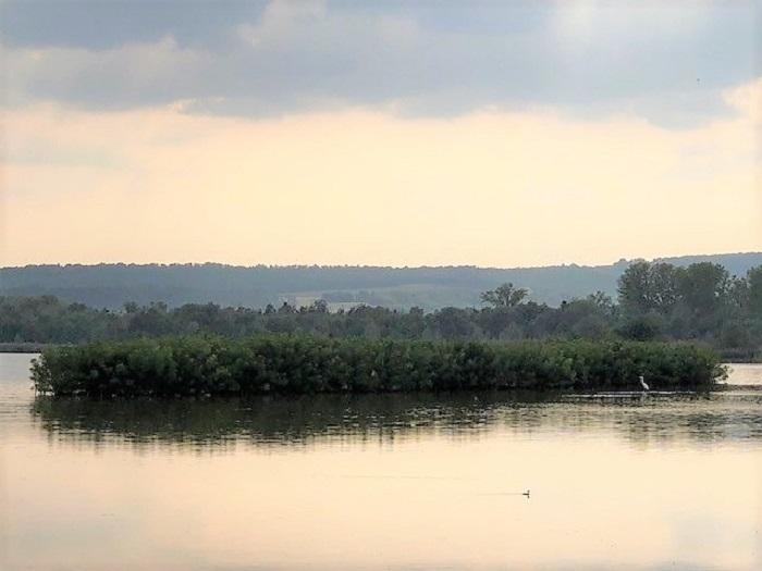 Birdwatching al Lago di Alviano