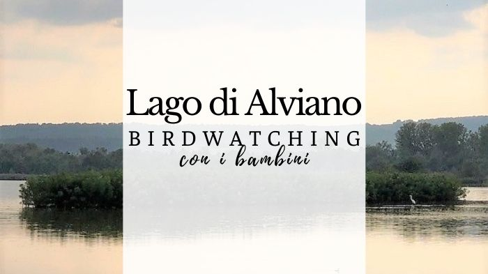 Lago di Alviano, birdwatching in mezzo alla natura