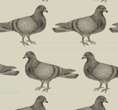 WALLPAPER - PIGEONS