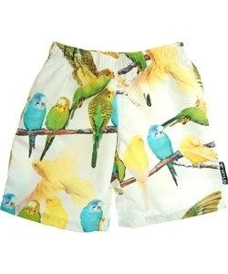 Parakeet print Surfy swimming shorts by Wild