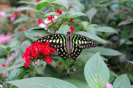 Sensational Butterflies at the Natural History Museum